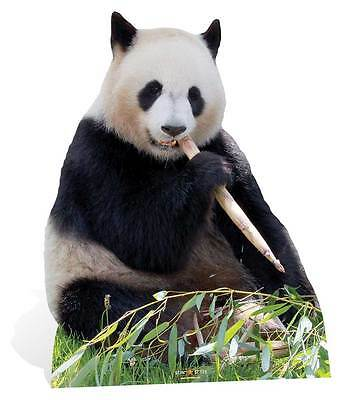 Giant Panda Lifesize Cardboard Cutout / Standee / Stand up / Standee bamboo