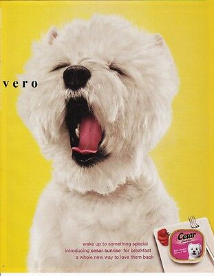CESAR dog food 2009 WESTIE west highland terrier ad print art clipping yellow