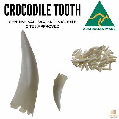 1 Loose SALTWATER CROCODILE TOOTH Teeth Rare Souvenir Collector DIY Necklace