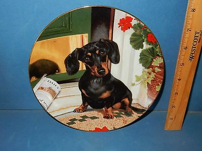 Welcome Home Black Tan Dachshund Dachsie Puppy Dogs Collector Plate Danbury Mint