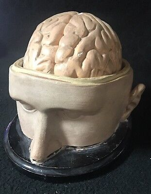 Antique Plaster Paper Mache Head and Brain Model Anatomical Model