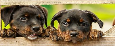 5 Bookmarks. Dogs. Set 2.