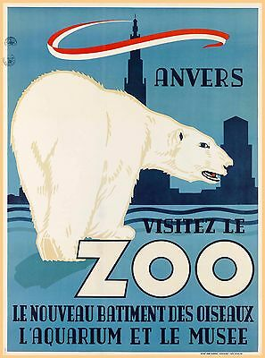 Anvers Antwerp Zoo Belgium Polar Bear Vintage Travel Advertisement Art Poster