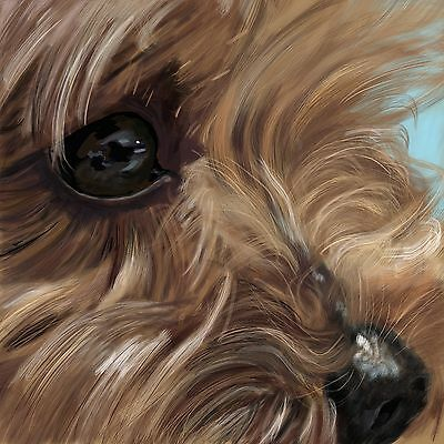 Print - A Yorkshire Terrier Up Close