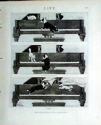 Boston Terrier Dog & Cat On A Grand Piano 1919 Life Magazine Reprint
