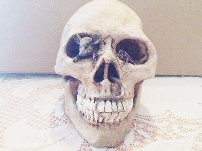 Halloween Spooky Skull, Rat and Tail In Eye, Free Shipping