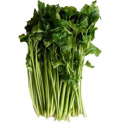 H084 Chinese Celery x100 seeds