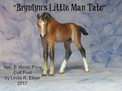 Custom CM Breyer Classic Pony foal to Welsh B colt x L. Elkjer**