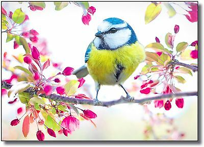 Bird Tree Blossom Flower Landscape Large Wall Art CANVAS Print A0 A1 A2 A3 A4