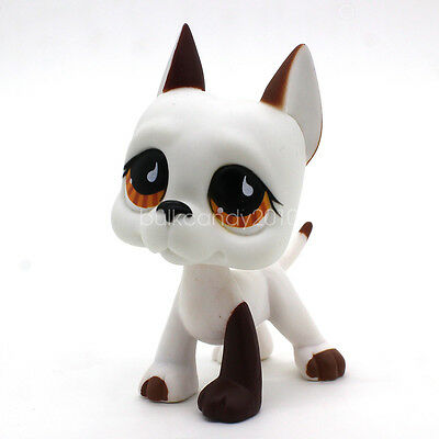 Littlest Pet Shop RARE Grand Danois Chien Chiot #750 Blanc Marron Chocolat Yeux