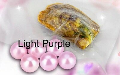 1 x Akoya Oyster With LIGHT PURPLE Pearl Inside **UK STOCK**