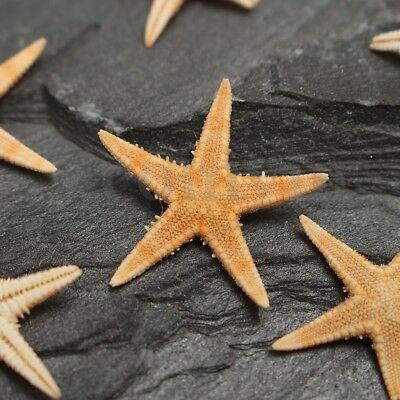 20/40/100Pcs Mini Natural Starfish Craft Star Fish Seashells Decoration DIY
