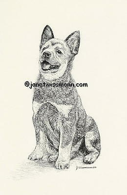 New ART PRINT, AUSTRALIAN CATTLE DOG Blue Red Heeler drawing picture painting