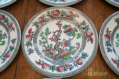 Wood's Ironstone China INDIAN TREE Dessert Plates Set 12 Excellent Condition!!