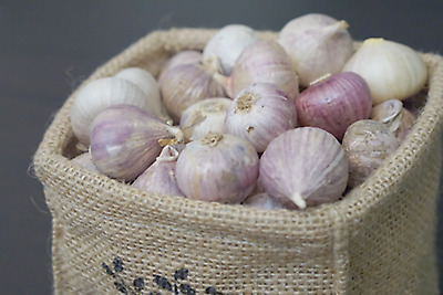 100 g Single Bulb form of Elephant Garlic For Cooking, Food Thai Herbs Free Ship