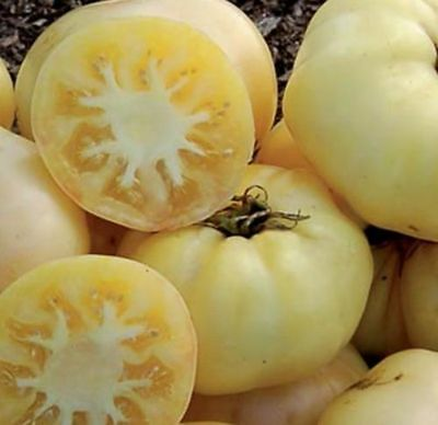 V446 Tomato White Beauty x25 seeds