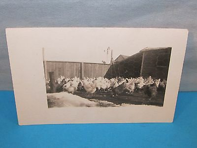 Antique CHICKEN COOP Windmill & Cat on Fence Farm Scene Real Photo Postcard RPPC