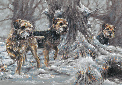 Border Terrier Dog, Christmas cards pack of 10 by Paul Doyle. C519X