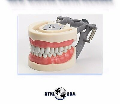 Dental Typodont Model 200 Removable Teeth Original Nissin Teeth Read Listing