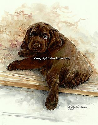 Sussex Spaniel  puppy limited edition print 11 x 14