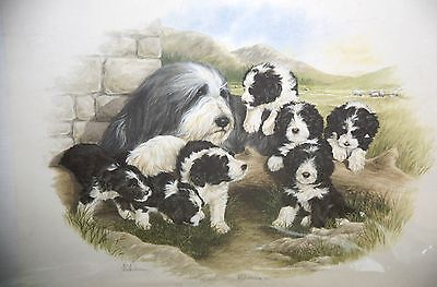 Bearded  Collie Mother and Pups Print Pencil Signed by Lynn Paterson