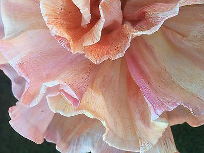 """6 x Hand painted Hand Made Crepe Paper Flowers (6"""")"""