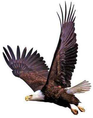 AMERICAN USA BALD EAGLE Flying image Pose #2 WindowCling Decal Sticker - NEW