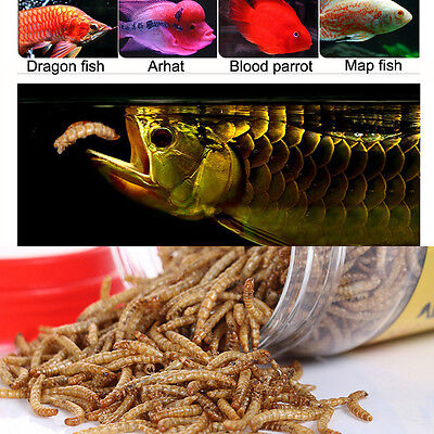 Aquarium Fish Food Dried Mealworm Worm for Turtle Reptile Birds Chicken Koi Feed
