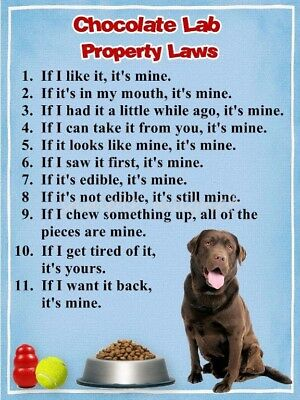 CHOCOLATE LAB Property Laws Magnet PERSONALIZED With Dog's Name 2