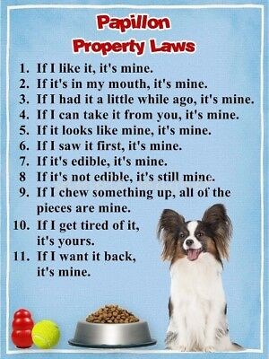 PAPILLON Property Laws Magnet PERSONALIZED With Dog's Name 2