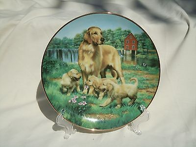 Golden Retrievers Plate Hamilton Collection 'Classic Sporting Dogs' Porcelain