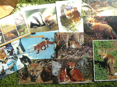 11 x Lot Collection Red Fox Postcards