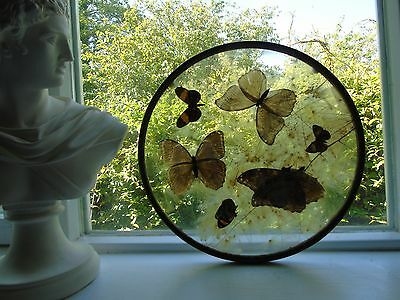 antique stand stained glass butterfly brass window  desk charger panel glass art