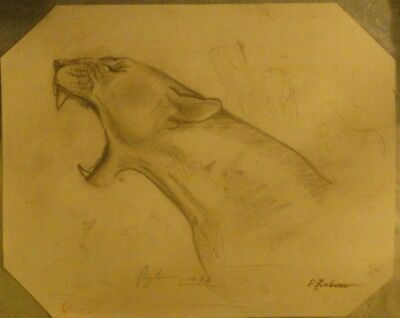 OLD EUROPEAN MASTER PANTHER Drawing Brown chalk on laid paper