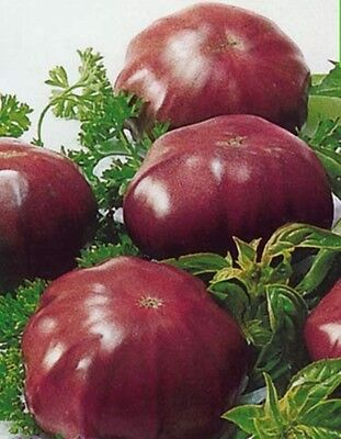 20 Tomato Seeds BLACK ELEPHANT-(Chyornyi Slon) Russian Heirloom Vegetable-Dark