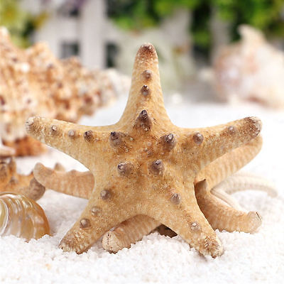 2/10Pcs Natural Starfish Shell Conch Fish Aquarium Beach Art Craft DIY Landscape