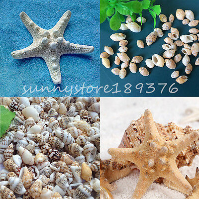 Starfish Conch Shell Necklaces Pendants Jewelry Miniature Making DIY Craft Décor