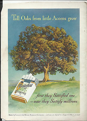 1930's Chesterfield Cigarettes Advertisement *Tall Oaks from Little Acorns Grow*