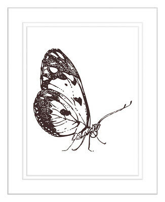 NEW Beautiful Monarch Butterfly Framed Print