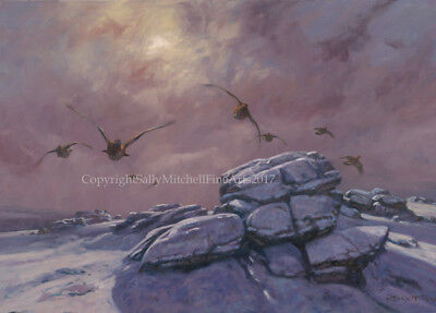 Grouse Christmas Cards pack of 10 by John Trickett. C545X