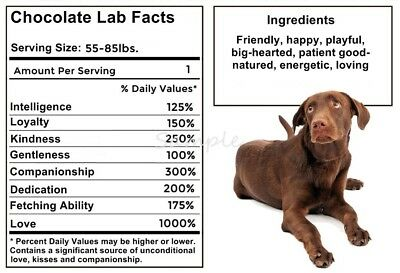CHOCOLATE LABRADOR RETRIEVER Facts LARGE FRIDGE MAGNET
