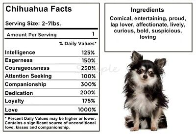 CHIHUAHUA Facts LARGE FRIDGE MAGNET