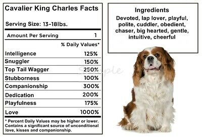 CAVALIER KING CHARLES SPANIEL Facts LARGE FRIDGE MAGNET