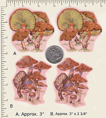 4 x Ceramic decals Fungi Toadstools Mushrooms  2 sizes  PD95a