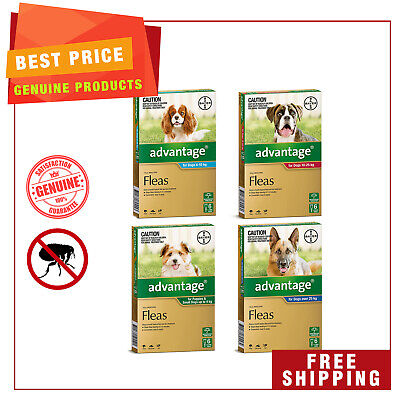 ADVANTAGE for Dogs 6 Pipettes + EXTRA 2 Pipettes Best Flea treatment for Dogs