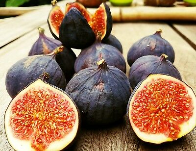 Samen schwarze türkische Bursa Feige, black bursa fig seeds, very sweet