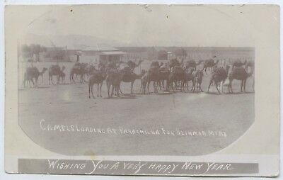 C1907 Rp Pu Postcard Camels Laoding At Parachilna For Blinman Copper Mine Sa Q34
