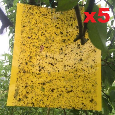 5 Sheets Yellow Sticky Insect Traps Houseplant Whitefly Aphid Gnats Hot Sales