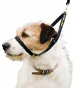 Canny Company Collier pour chien Taille 3