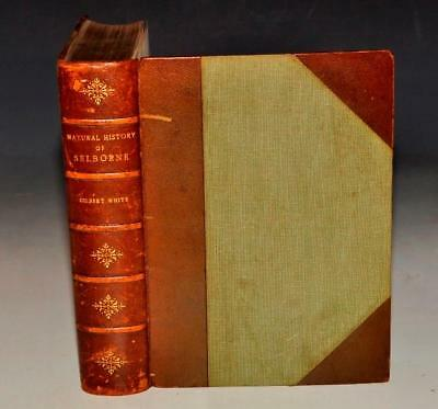 GILBERT WHITE NATURAL HISTORY OF SELBORNE Illustrated by EDMUND. H. NEW 1st 1900